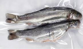 bolsas para empaque de pescado